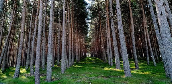 GEFRECON Gestão Forestal Conjunta
